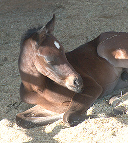 Serr Kazmeen enjoying a nap  -  Diana Johnson photo