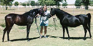 Ahmeds Khedena, 18 months old, Bruce Johnson and Masada Mishannah - 1997 Diana Johnson photo