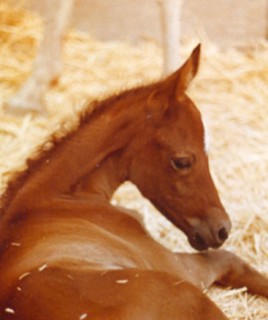 Shalima was foaled on April 23rd, 1991