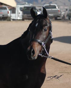 Serr Kazmeen looking around at his first show.  Diana Johnson photo