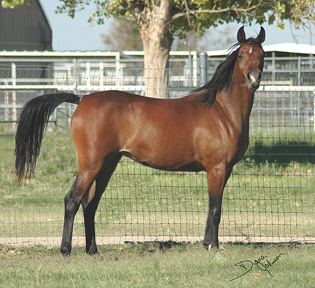 Khebirs Amira at 2 years old  - September 2005 Diana Johnson photo