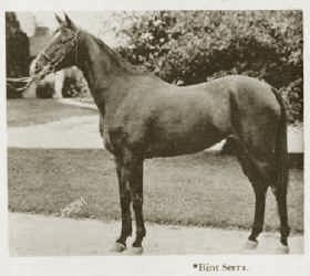 Bint Serra  -  photo from  The Royal Arabians of Egypt and the Stud of Henry Babson