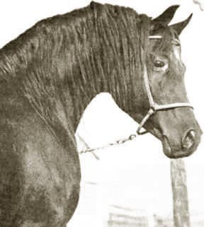 Fa-Serr - A Judy Forbis photo from her wonderful book  The Classicc Arabian Horse.