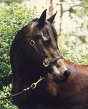 Serr Beth  in 1995 at twenty years old.  Photo by owner Robin Weeks.