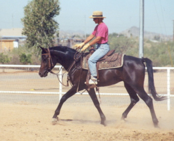 Just picture a dressage saddle....        June 2002 Diana Johnson photo