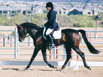 Ahmed Fabo  -  December 2002 Saguaro Classic Arabian Horseshow - Diana Johnson Photo