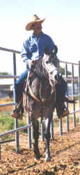 Ahmed Serr-Fabah being ridden in a halter by Randy Sandidge - 2001 Diana Johnson photo