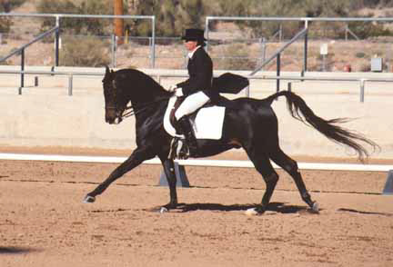 Ibn Sabbah Bedu+/  -  Prix St. Georges at the 2000 Saguaro Classic - Diana Johnson photo