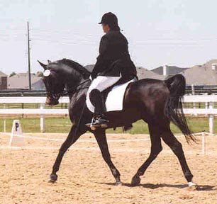 Serr Sotamm is bred by Elizabeth Dawsari.  -   Elaine Yerty 2003 photo